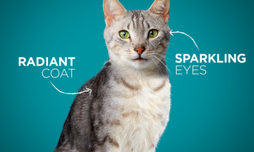 Purina One Cat See the Difference CTA