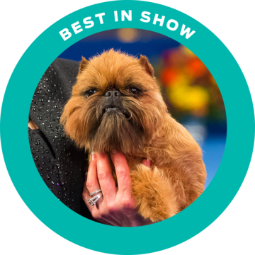2017-national-dog-show-best-in-show-newton