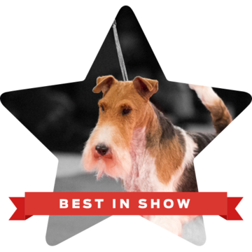 beverly-hills-dog-show-2019-best-in-show-king