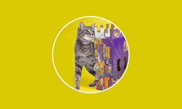 Friskies Cat's Play: Videos, Cat Games, Downloads & More | Purina