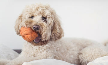 5 Games to Play with Your Dog