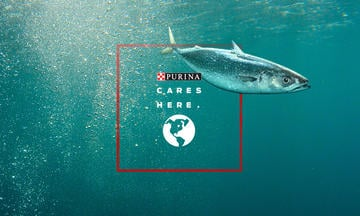 Fish in ocean purina cares about responsible sourcing of ingredients