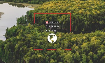 Green forest and lake Purina cares about recycling for a cleaner planet