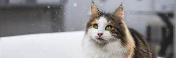 Major Breakthrough in Managing Cat Allergens Hero