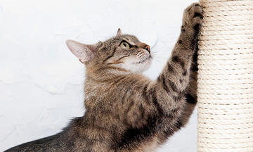 Cat playing on a DIY Cat scratching post