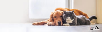 purina-dog-and-cat-expertise-articles-homepage