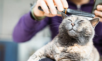 Person combing a cat