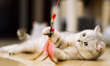 Cat playing with DIY wand cat toy