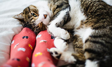 cat laying on back snuggling against feet with socks
