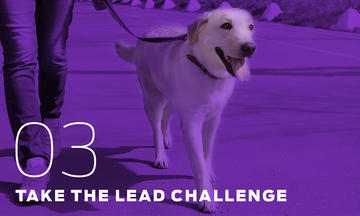Take the Lead with the purple leash