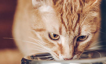purina-read-cat-food-labels