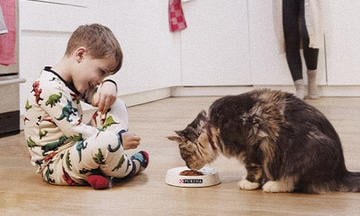 Boy caring for cat feeding purina cat food