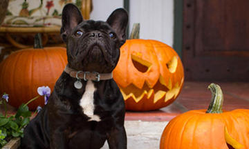 5-halloween-safety-tips-for-pets