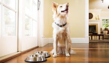 Healthy Dog Food