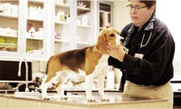 purina-veterinarian-resources