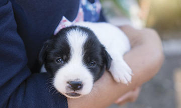 what-does-my-puppy-need-article-500x300.jpg