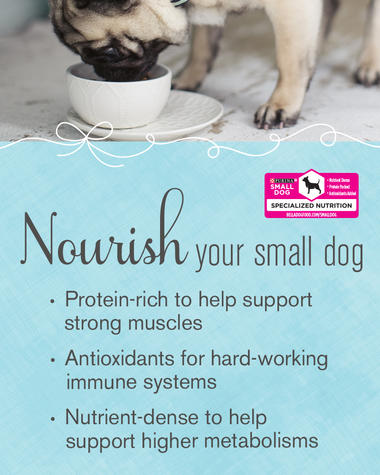 nourish your small dog