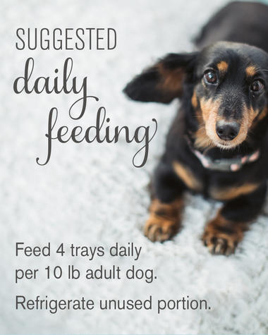 suggested daily feeding guide