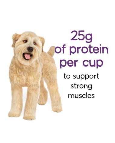 beneful-play-life-protein-dry-dog-food