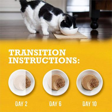 Transition Instructions with cat food