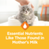 Essential nutrients for your kitten.