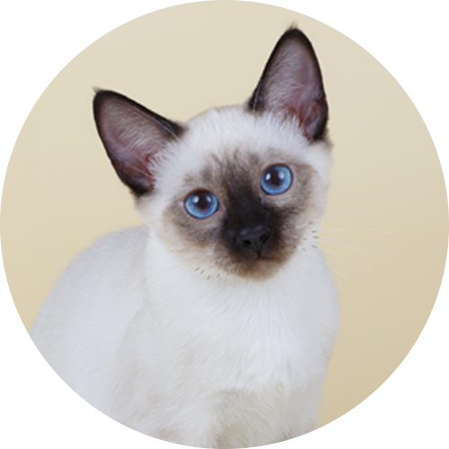 Cat Names | Cat Name Generator | Purina
