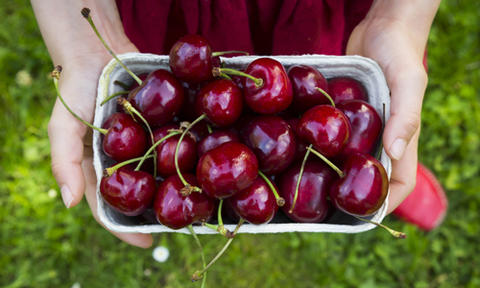 are cherries good for dogs