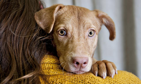 Image result for adopt a pet